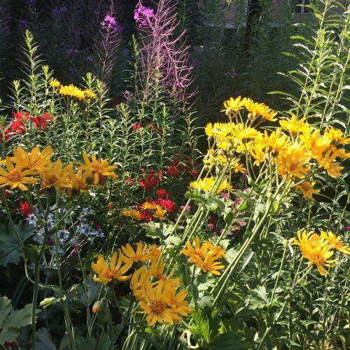 2017 Sylvia Pincott Garden